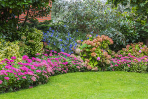 Privacy With Plants Houp Landscaping Enhancing Nature S Beauty
